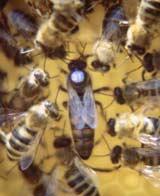 Bienen Und Partner imkerverein nagold bienen